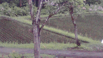 2012053007300001.jpg