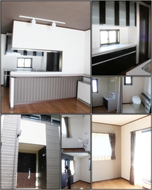 cats1_20120925214558.jpg
