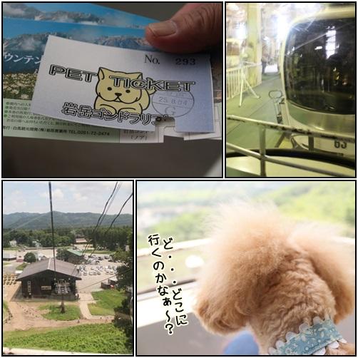 cats1_20130809162022406.jpg