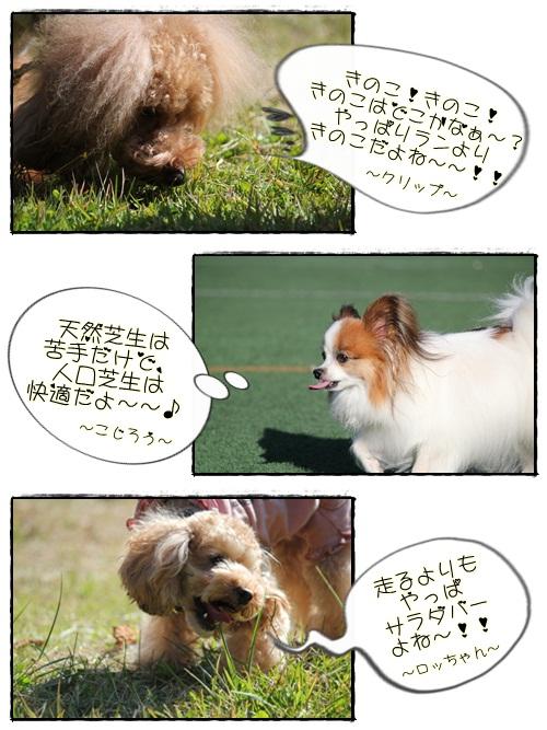 cats2_20121113153335.jpg