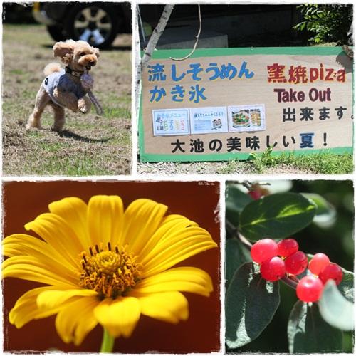 cats3_20120718225818.jpg