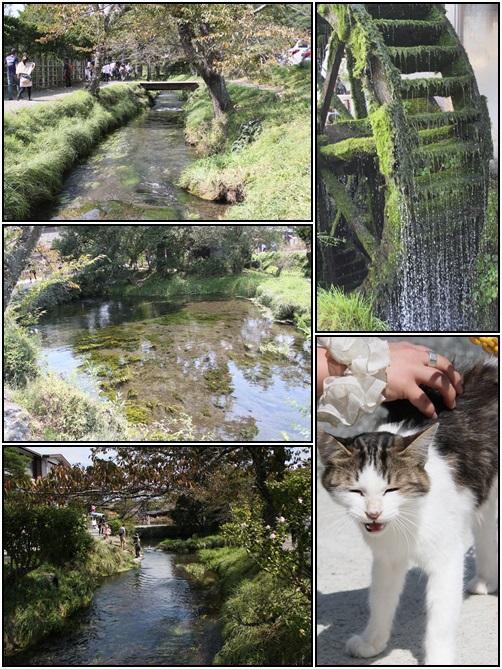 cats3_20131008225007fdc.jpg