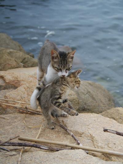 仔猫さらい2