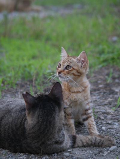 仔猫さらい4