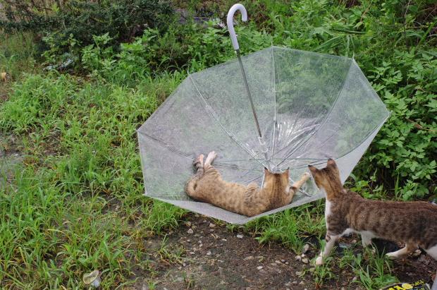 雨の合間に9