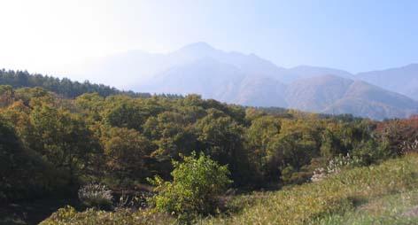 H251106栗の木