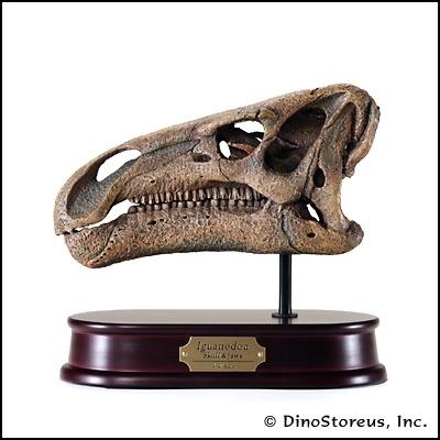 イグアノドン頭骨