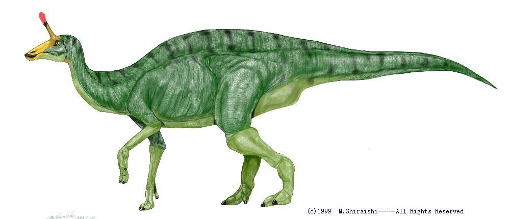 チンタオサウルE