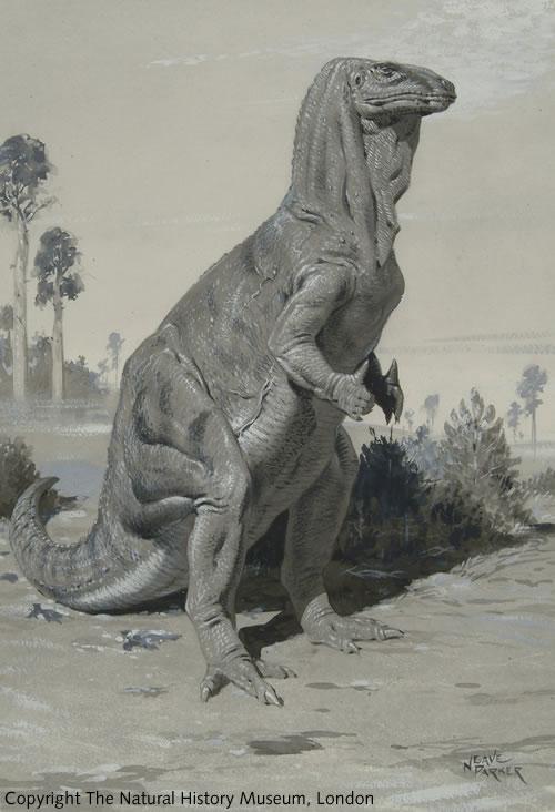 iguanodon-E697A7E5BEA9E585832.jpg