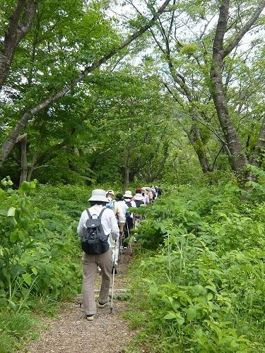 20120624wakayanagiyakurai-P1180961.jpg