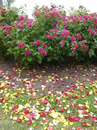 20120624wakayanagiyakurai-P1180981.jpg