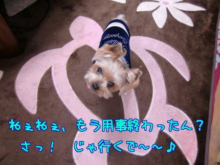 平成24年(2012年)1月お散歩の催促~