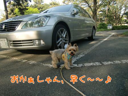 平成24年(2012年)4月28日御所の駐車場にて