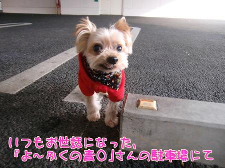 平成24年(2012年)12月16日青山の駐車場
