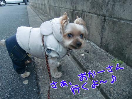 平成24年(2012年)朝のお散歩