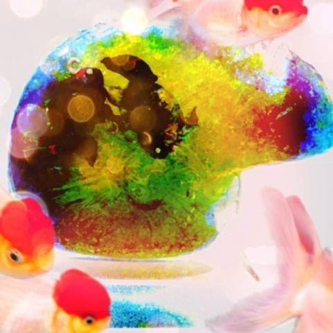 コソコソ岩と金魚