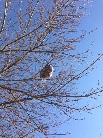 枯木に鳥の巣