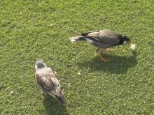カヨコのLife Is BEATful-たずね鳥