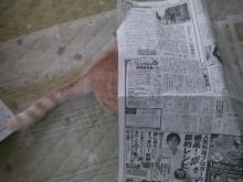 カヨコのLife Is BEATful-新聞ぐー