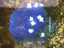 千葉外房の歌の教室・カヨコのボイストレーニングROOM-SANY0054.jpg
