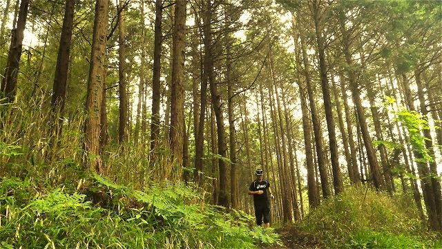 forest_20120602163909.jpg