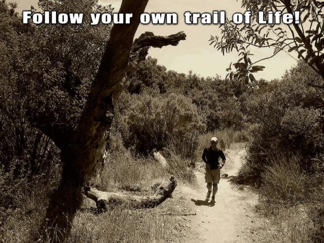 trail_of_life_20121231070328.jpg