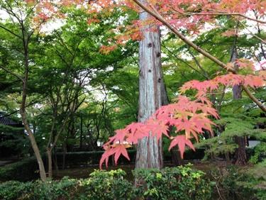 11月3日現在、左京区の真如堂。