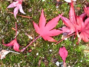 紅葉の季節です!