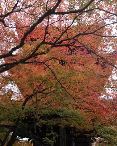 塔が紅葉に隠れてます。