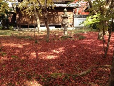 紅葉のじゅうたん。