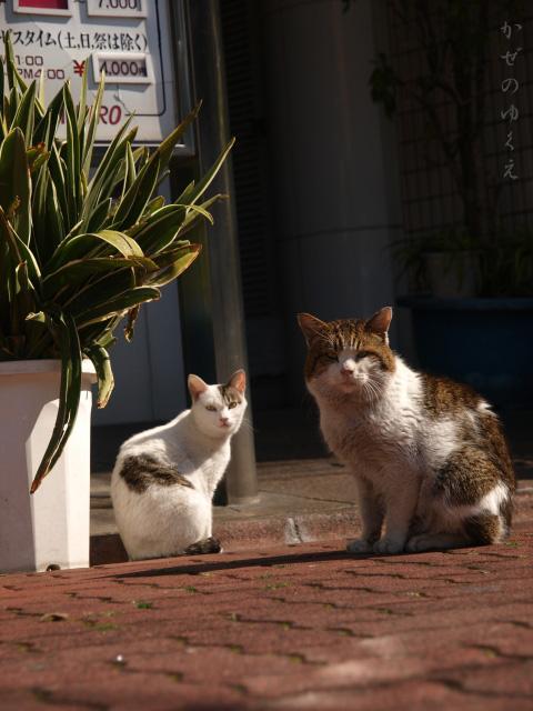 猫といっしょ(3)