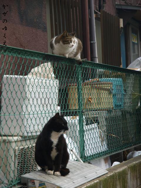 猫といっしょ(1)