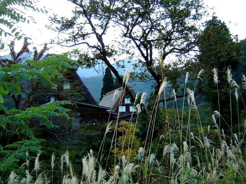 秋風が足早に駆け、朝晩はヒンヤリ~白川郷の紅葉はこの時期からがピークを迎えます~ ④