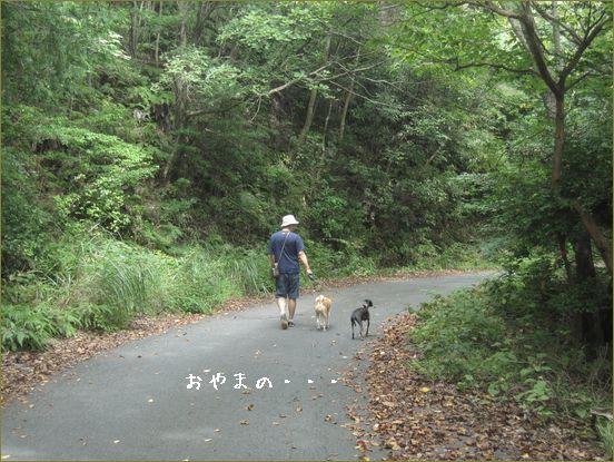 久しぶりのやま散歩