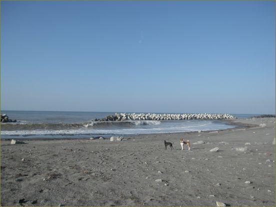 きれいな砂浜で遊ばせてあげたいよ。