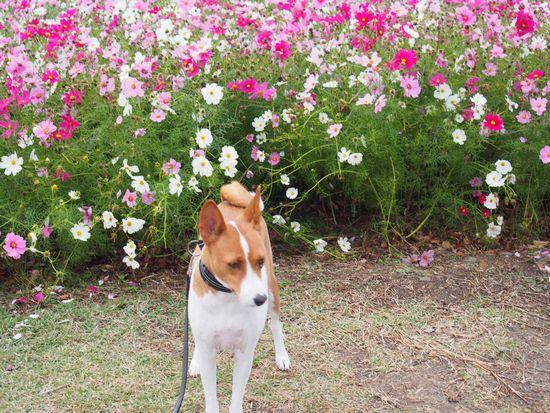 花には興味はないぜ。