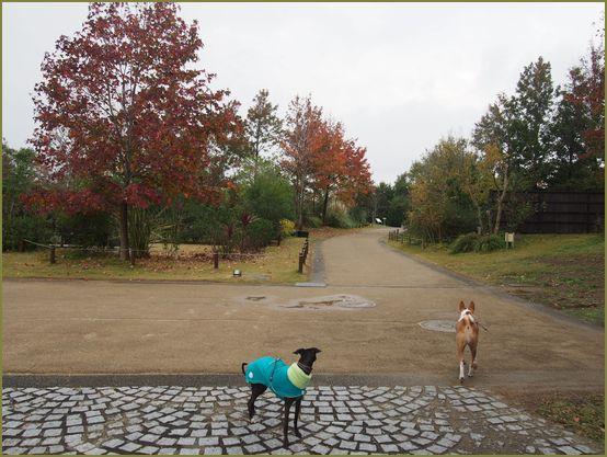 なんとなく雨が上がったガーデンパーク