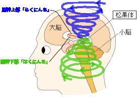 意識、脳幹相関図