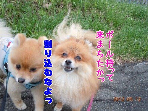 20120513_04.jpg