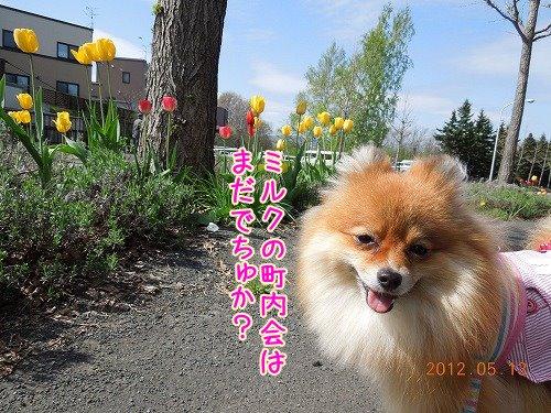 20120513_10.jpg