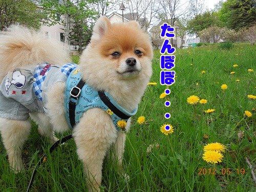 20120519_04.jpg