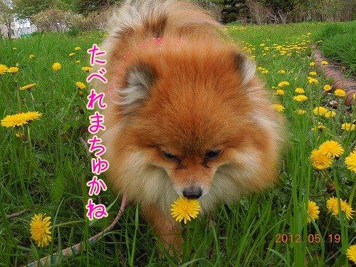 20120519_05.jpg