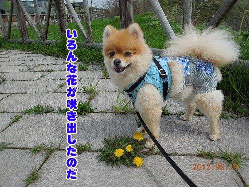 20120519_06.jpg