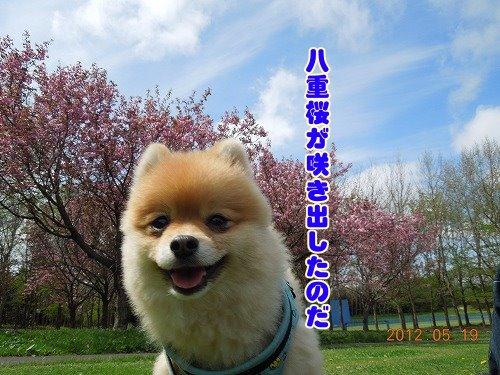 20120519_09.jpg