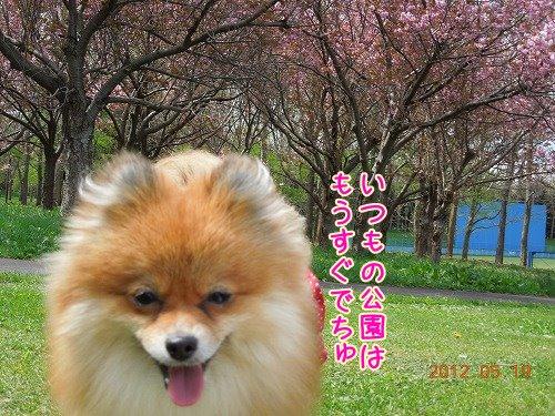 20120519_10.jpg
