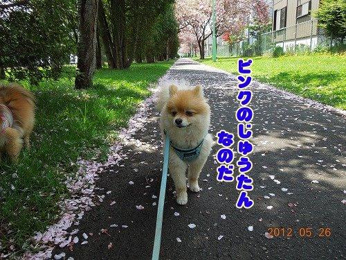 20120526_02.jpg