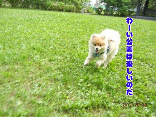 20120608_01.jpg