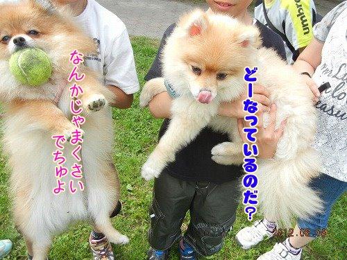 20120608_04.jpg