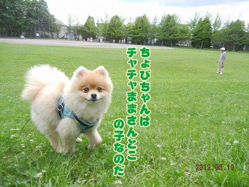 20120610_02.jpg