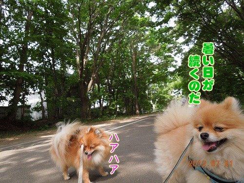20120701_004.jpg
